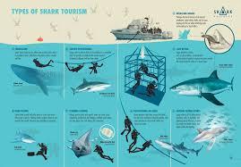 shark business shark conservation through ecotourism diving sharks