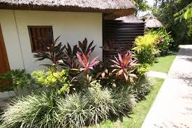 Small Picture All sizes Tropical Garden Plant Bed Idea Flickr Photo Sharing