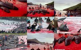 Resultado de imagen de islas feroe matanza