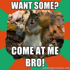 want some? come at me bro! - Ill-Informed Squirrel | Meme Generator via Relatably.com