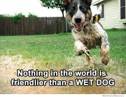 Wet Dog Meme | WeKnowMemes via Relatably.com