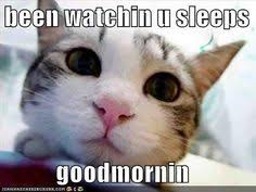 Cat humour on Pinterest | Cats Humor, Cats and Kitty via Relatably.com