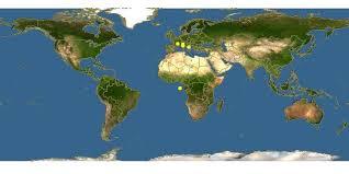 Hieracium tomentosum - -- Discover Life mobile