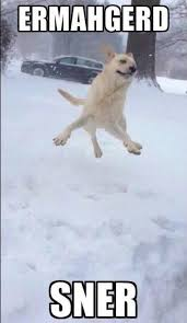 animals, christmas, dogs, funny, lol, snow, winter, funny dogs ... via Relatably.com