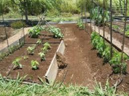 Small Picture Download Garden Plot Design adhome
