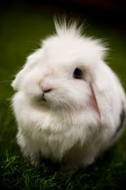 best images about cutest bunny in the world a super fluffy easter bunny cause you told me today that if there was any