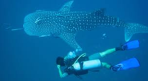 Image result for free pics koh tao