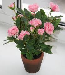 Как ухаживать за <b>розами</b> в горшках - статья от пользователя ...