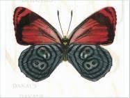 <b>Декор керамический</b> Сан-Ремо тип 3 200х200 <b>Керамин</b> бабочка А