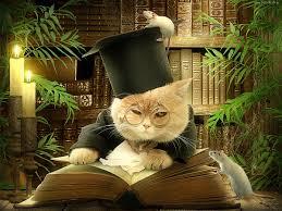 Znalezione obrazy dla zapytania kot z książką