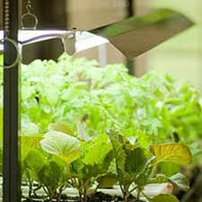 How to Choose an <b>LED Grow Light</b> | Gardener's Supply