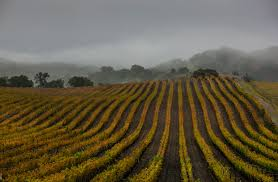 a wet year won t beat california s never ending drought wired california s huge storm could cause disastrous melting in the mountains
