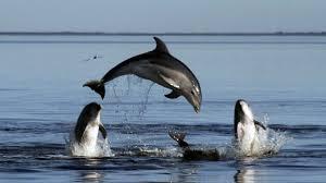 Массовое самоубийство дельфинов-гринд в Грузии