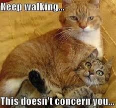keep walking funny cute memes animals cat adorable lol funny ... via Relatably.com