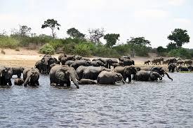 Kavango–Zambezi Transfrontier Conservation Area