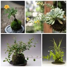 цветы | Записи в рубрике цветы | Dezi-ya : LiveInternet ...