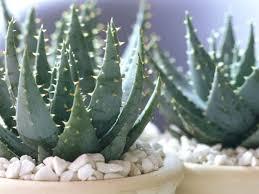 pothos best low light office plants