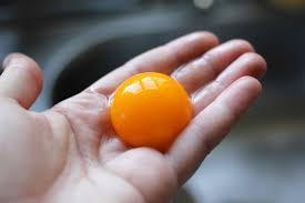 Image result for egg yolk