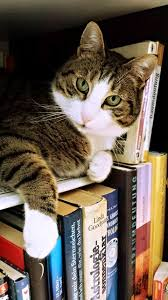 assignments library cat 718936 1280