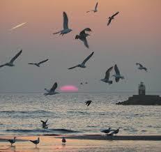 الطيور... images?q=tbn:ANd9GcT