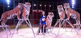 Resultado de imagen de domadora de tigres