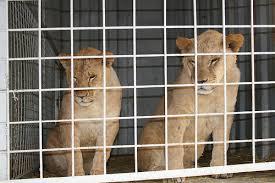 prohiben-animales-circo