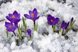 Image result for spring and ice flowers