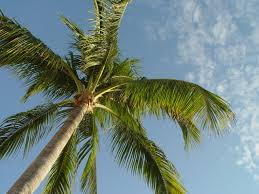 Image result for palmtree