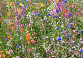 Small Picture Wildflower Garden Gardening Tips Garden Guides