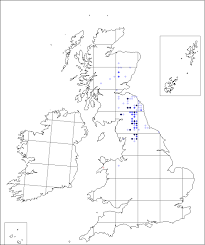 Crepis mollis | Online Atlas of the British and Irish Flora