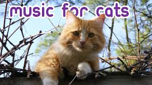 EXTREMELY Soothing <b>Cat</b> Therapy Music - <b>Relax</b> Your <b>Cat</b> ...