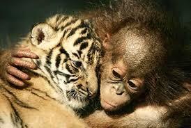 תוצאת תמונה עבור love animals