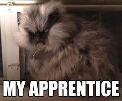 fluffy grumpy cat memes | quickmeme via Relatably.com