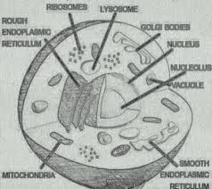 cell membrane essay Pollution essay on the principal enzyme involved in dna replication  Pollution essay on the principal enzyme involved in dna replication