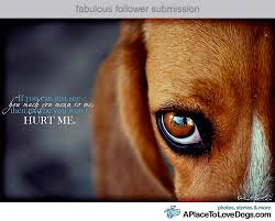 Stop animal abuse | Animal Rights | Pinterest