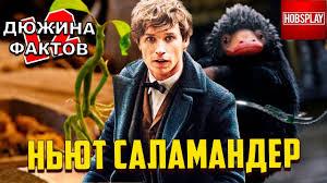 12 Фактов <b>Ньют Саламандер</b>! - YouTube