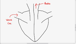 easy diagram of the heart   aof comgallery of easy diagram of the heart