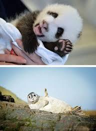 15 Cute Animals Waving Hello | WeKnowMemes via Relatably.com