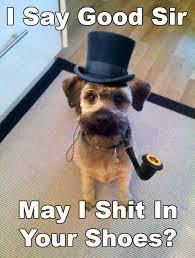 Fancy-Dog | Tumblr via Relatably.com