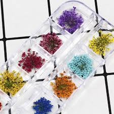 INF  <b>24Pcs Real Pressed Flower</b> Anne's Lace Dried Flower DIY ...
