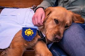 <b>Paw patrol</b>: These pooches are helping put <b>child</b> abusers behind ...