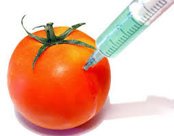 genetically modified food essay