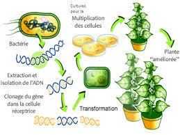 OGM : L'ADN des cultures génétiquement modifiées est transféré aux humains qui les mangent. Images?q=tbn:ANd9GcT9eXTp-gXcHcu30rT4jflrpaOjEbML4-odbp_UAoqVZal1T5WOMQ