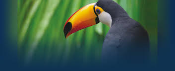 south america cruises amazon cruises cruises south america wildlife