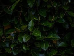 Download wallpaper 800x600 <b>leaves</b>, <b>plant</b>, green, <b>dark</b>, <b>branches</b> ...