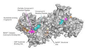 Glucose-6-phosphate dehydrogenase