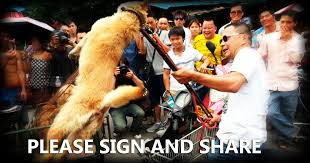 Image result for yulin dog meat festival petition
