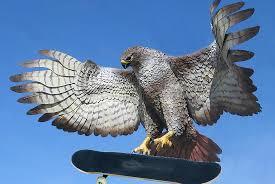 Image result for dumb hawk