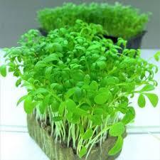 Купить <b>семена кресс</b> в Лучегорске