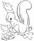 Белка с орешком раскраска